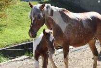 Vier Kompetenzstufen der PferderatSCHLÄGE